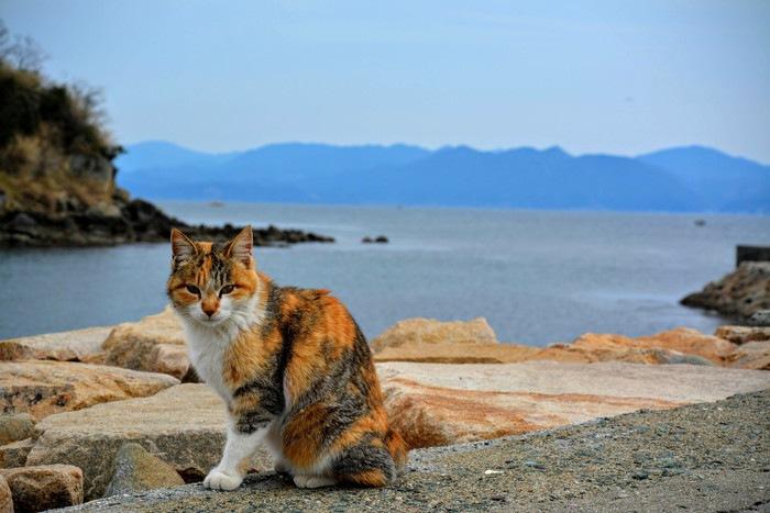 島の三毛猫
