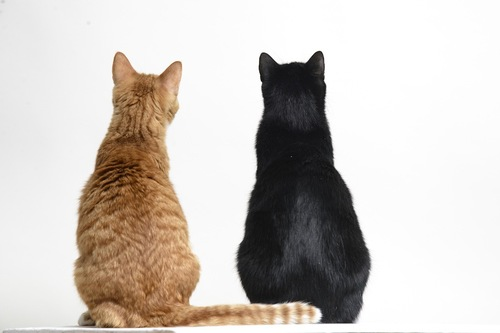 後ろを向いて座る茶トラ猫と黒猫