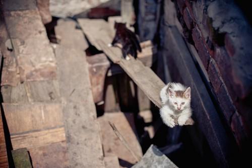 崖から落ちそうな子猫