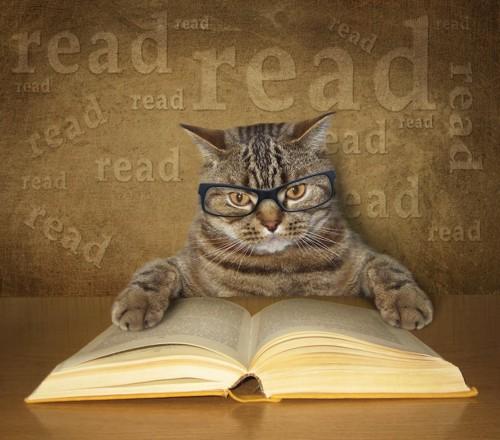 眼鏡をかけて本を開いている猫