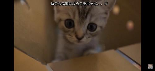 新しい猫ちゃん
