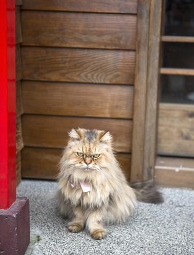 家の前でお座りする猫