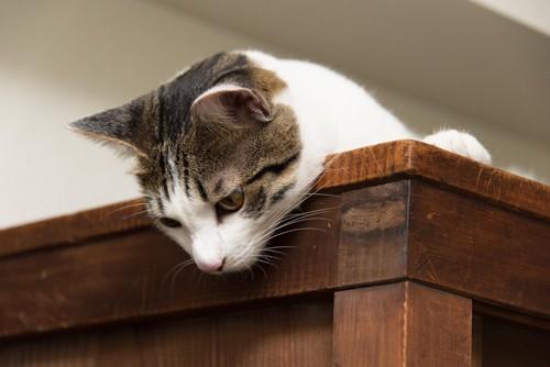 家具の上から見下ろす猫
