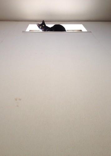 高い場所に乗って下を見る猫