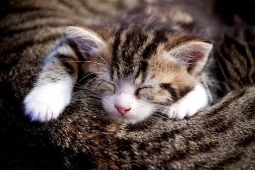 猫親子イメージ