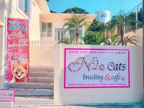 猫カフェの入口