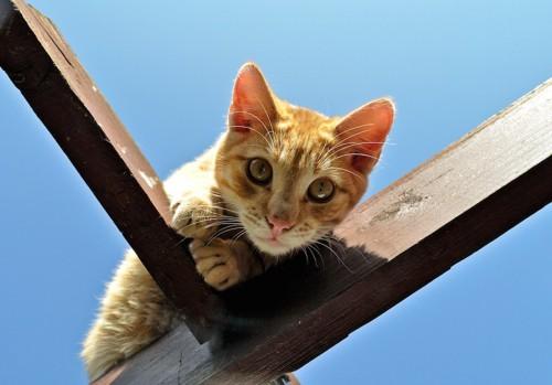 柱に登って下を見る猫
