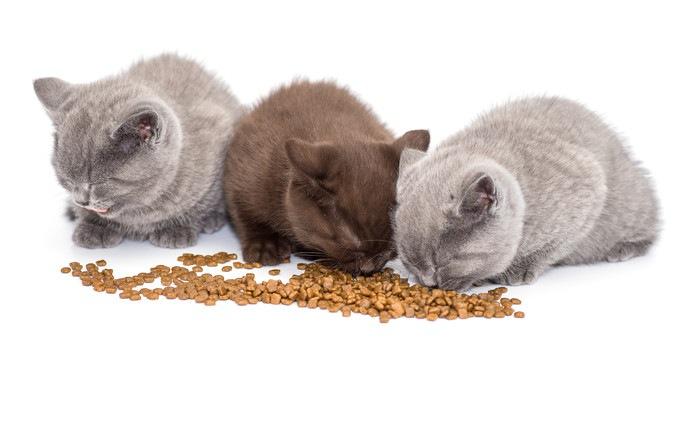 餌を食べる3匹の猫