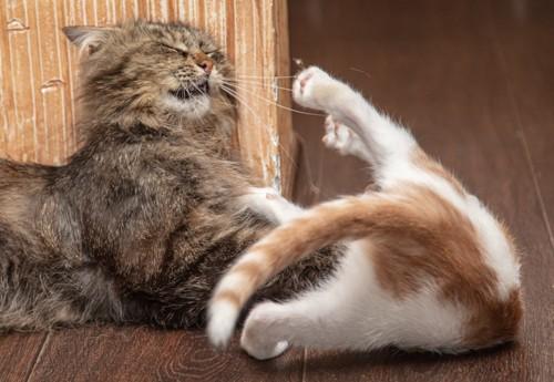 じゃれる猫たち