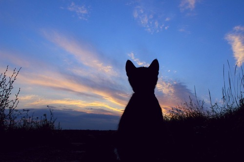 夕焼の背景に猫と草むらのシルエット