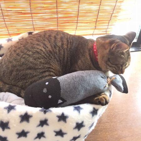 猫が匂いを嗅いでいる