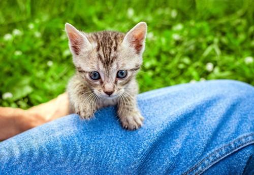 膝の上の猫