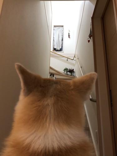 犬猫トラップにピンチ