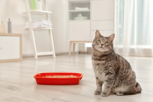 赤い猫用トイレのそばに座っている猫