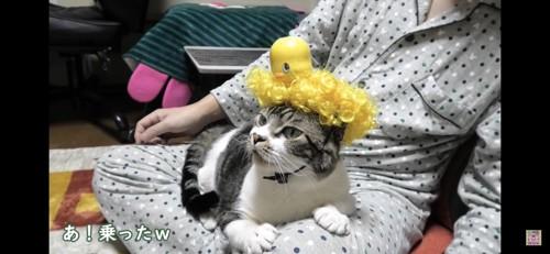 黄色パーマ