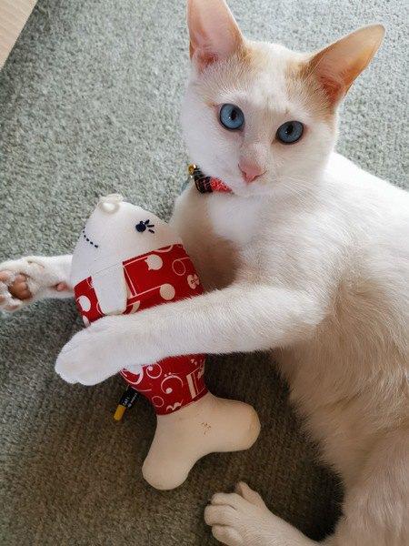 タイ焼きのおもちゃで遊ぶバン猫