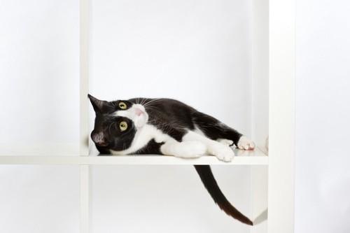 棚で寝ている猫