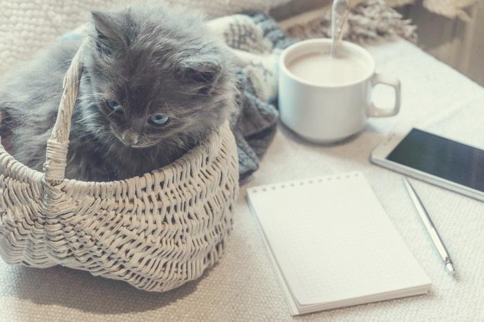 バスケットに入る子猫
