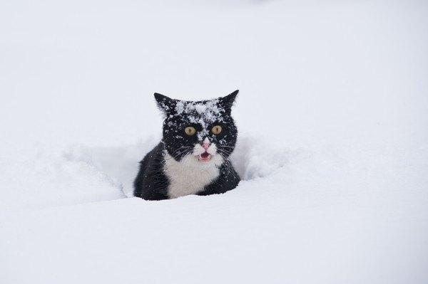雪の中にいる黒白猫