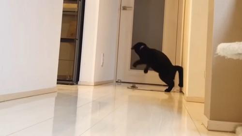 おもちゃにジャンプしようとする猫