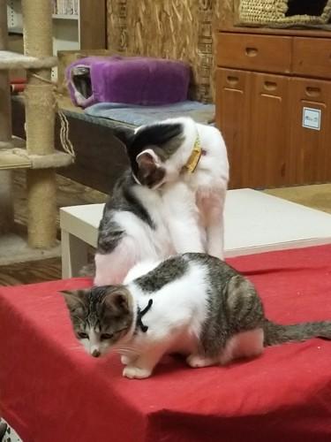 毛づくろいをする猫達