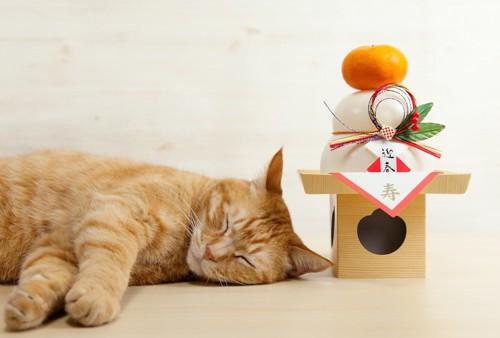 鏡餅の横で眠る茶トラ猫