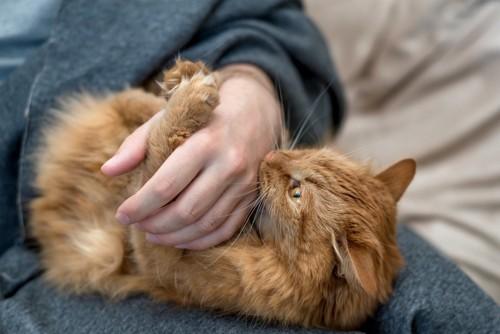 人の手に噛みつく猫