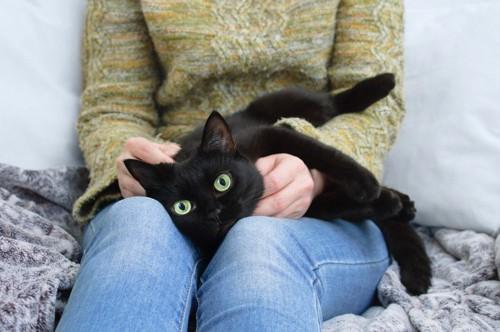膝の上で寝る黒猫