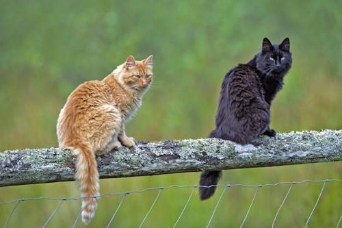 木の上に座る茶トラ猫と黒猫
