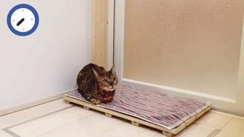 マットの上に座る猫