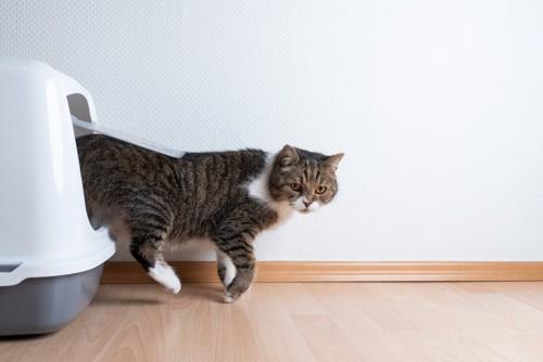カバー付きのトイレから出てくる猫