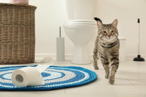 人用のトイレからこちらに歩いてくる猫