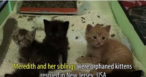 箱の中に数匹の子猫