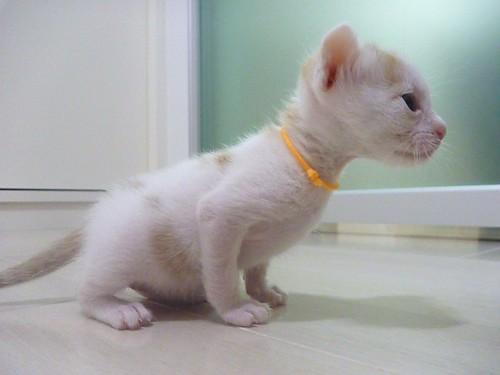 成長した仔猫