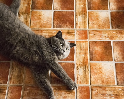 タイルの上で寝転ぶ猫