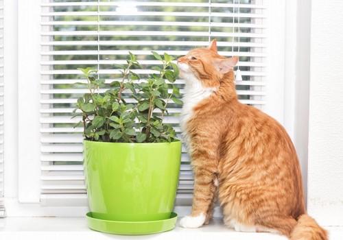 植木鉢の植物のにおいを嗅いでいる猫