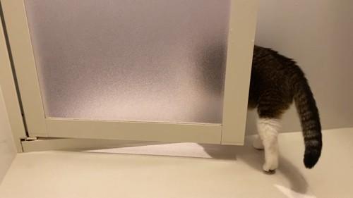 お風呂から出ていく猫