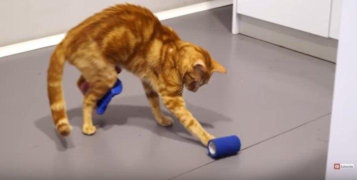 床の上で遊ぶ猫
