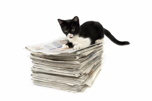 新聞の束の上に乗っている子猫