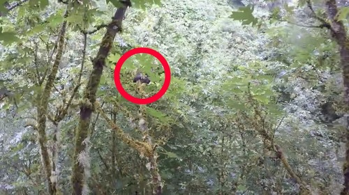 高い木の上にいる猫の姿