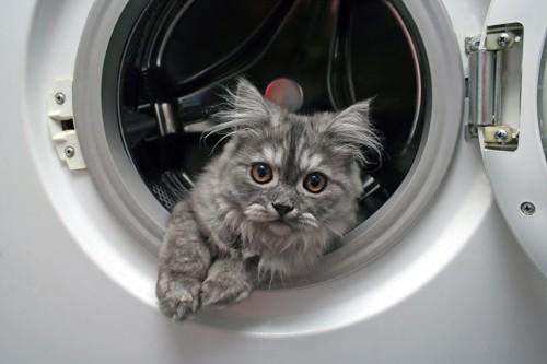 洗濯機の中にいる猫