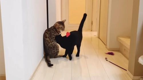 ベンガル猫に頭をスリスリする猫