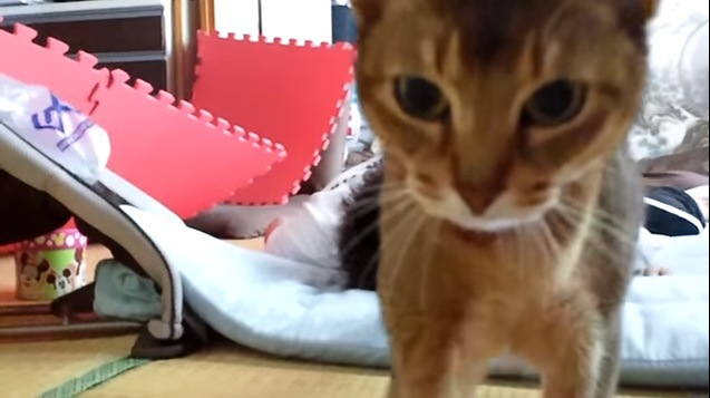 猫の顔アップ