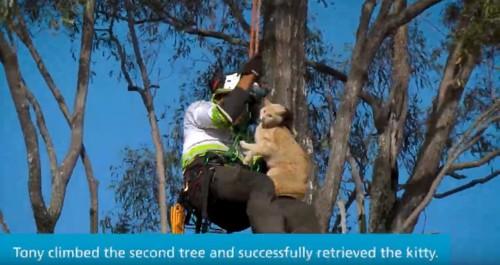猫を木から下す男性