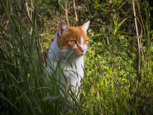 草むらから様子をうかがう猫