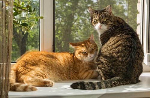 窓際の猫達
