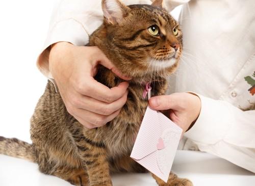 首輪に手紙を付ける猫