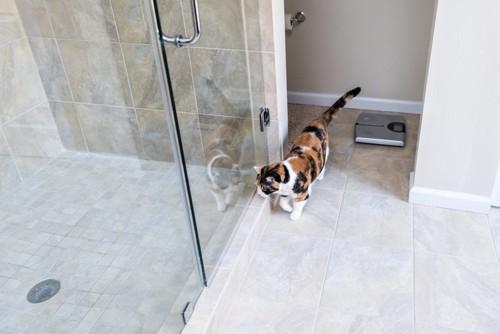 シャワールームとそれをのぞく三毛猫