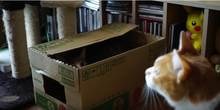 段ボールの中からもう1匹の猫を見つめる猫