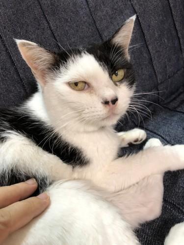 白黒猫まぁこ